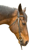 Tête de cheval de Brown d'isolement Photo libre de droits