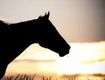 Tête de cheval de silhouette Images libres de droits