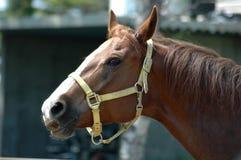 Tête de cheval intéressante Photographie stock libre de droits