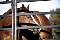 Tête de cheval par la barrière Images stock