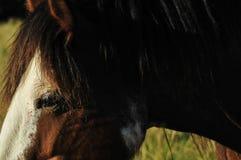 Tête de cheval partielle dans le pâturage Photos stock