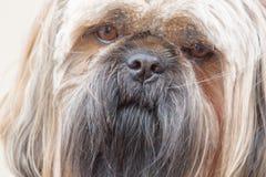 Tête de chien photo libre de droits