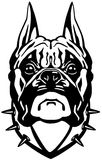 Tête de chien de boxeur Photo stock