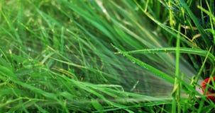Tête de circuit de refroidissement automatique profondément dans le fonctionnement d'herbe de pelouse clips vidéos