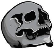 Tête de crâne Photo libre de droits
