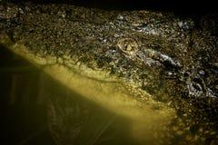 Tête de crocodile Photo stock