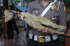 Tête de crocodile en Indonésie Image stock