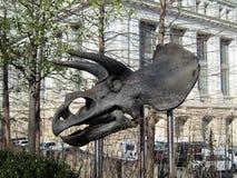 Tête de dinosaure Photo libre de droits