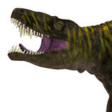 Tête de dinosaure de Batrachotomus Photo libre de droits