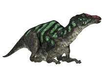Tête de dinosaure de Maiasaurus image stock