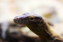 Tête de dragon de Komodo Photographie stock