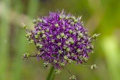 Tête de fleur Image stock