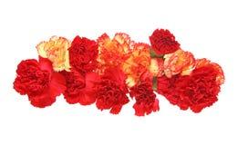 Tête de fleur d'oeillet Photo stock