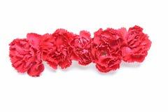 Tête de fleur d'oeillet Image stock