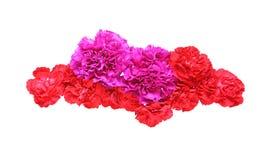 Tête de fleur d'oeillet Photo libre de droits
