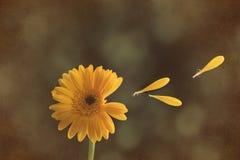 Tête de fleur de Gerbera Image stock