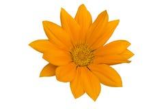 Tête de fleur orange Photos libres de droits