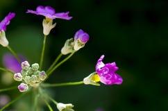 Tête de fleur rose Photo libre de droits