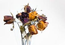 Tête de fleur rose sèche dans le vase Photo libre de droits