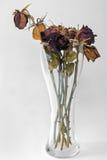 Tête de fleur rose sèche par plan rapproché dans le vase Photos libres de droits