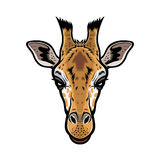 Tête de girafe Photo libre de droits