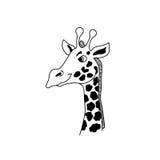 Tête de girafe de vecteur Photo libre de droits