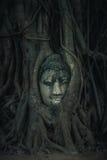 Tête de grès Bouddha dans les fonds d'arbre Photographie stock libre de droits