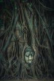 Tête de grès Bouddha dans les fonds d'arbre Photos stock