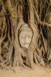 Tête de grès Bouddha dans les racines d'arbre Photographie stock
