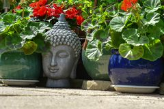 Tête de Grey Buddha parmi des usines de jardin photo libre de droits