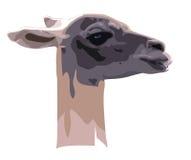 Tête de guanaco de chameau Photo libre de droits