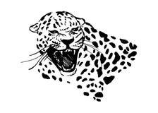 Tête de jaguar d'hurlement Images libres de droits
