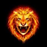 Tête de lion du feu. Image libre de droits