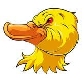 Tête de mascotte d'un canard fâché illustration libre de droits