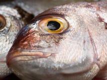 Tête de poissons Image libre de droits