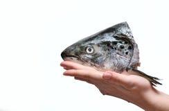 Tête de poissons Photo libre de droits