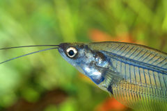 Tête de poissons photos libres de droits