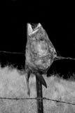 Tête de poissons Photos stock