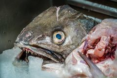 Tête de poissons au marché Photographie stock