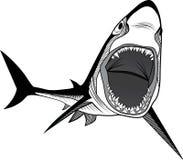 Tête de poissons de requin Image libre de droits
