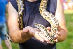 Tête de python réticulé dans les mains de l'homme photographie stock libre de droits