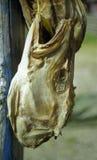 Tête de séchage d'un poisson Photographie stock libre de droits