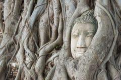 Tête de s de Bouddha la 'dans l'arbre s'enracine images libres de droits