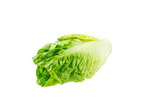 Tête de salade de laitue romaine photo stock