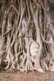 Tête de statue de Bouddha Photo libre de droits