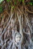Tête de statue de Bouddha Photographie stock