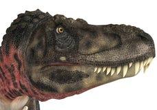 Tête de Tarbosaurus Images libres de droits