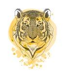 Tête de tigre d'isolement sur le fond jaune d'éclaboussure de peinture d'aquarelle Portrait stylisé d'animal sauvage Zentangle a  Photo stock