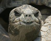 Tête de tortue de Galapagos Image libre de droits