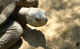 Tête de tortue, sembler d'oeil fâché sur le plancher de sable dans la lumière du soleil et ombre Image libre de droits